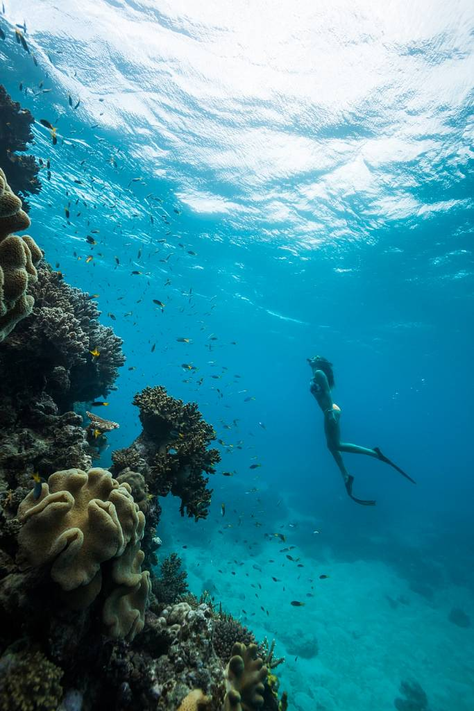 Freediving Great Barrier Reef